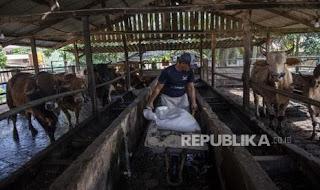 Blora Gandeng UGM Kembangkan Industri Peternakan