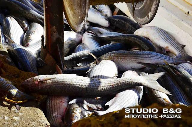 Μουσουλμάνος ψαράς μοιράζει τόνους ψάρια σε εκκλησία της Ρόδου
