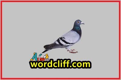 Report Text Bahasa Inggris Tentang Burung Merpati