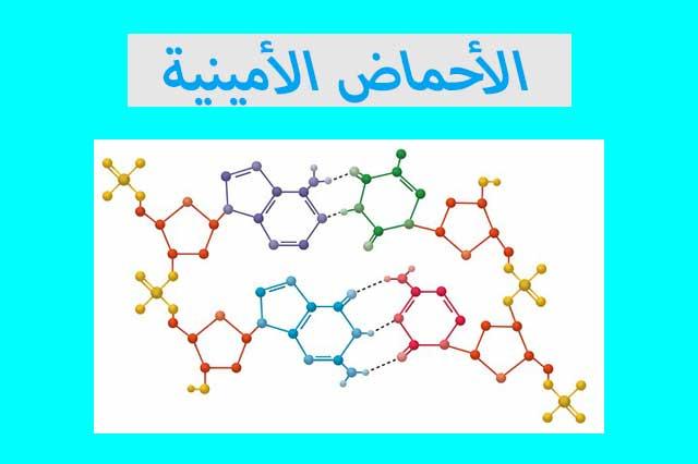ما هي الأحماض الأمينية وما الغرض منها؟