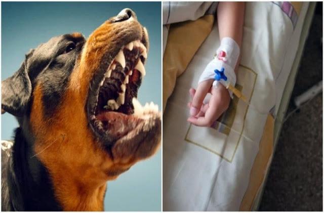 Στο νοσοκομείο 11χρονο παιδί από επίθεση σκύλου στην Εύβοια