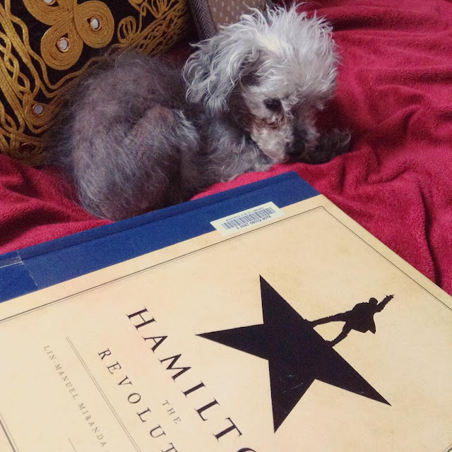 Murchie curls up beside a black and gold pillow on a red blanket. In front of him is a massive hardcover copy of Hamilton The Revolution. Its beige cover features the black silhouette of a man with his legs splayed and one hand raised like he's dancing. He perches atop a star.