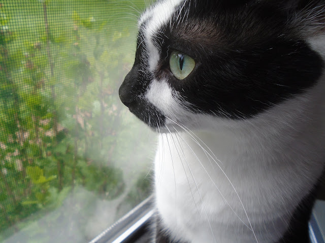 Calm kitty at window