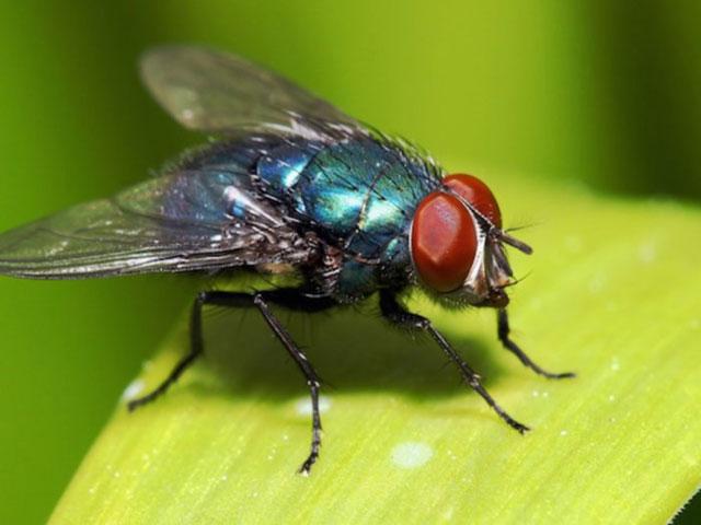 Mengajari Lalat Berhitung