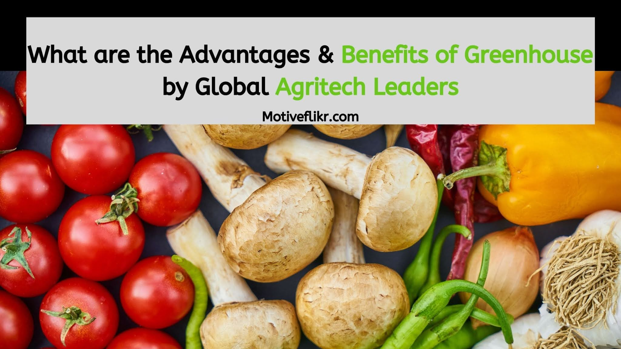 What are the Advantages & Benefits of Greenhouse by Global Agritech Leaders
