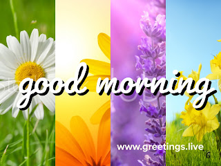4 different colours and different flowers Unique good morning greetings live image