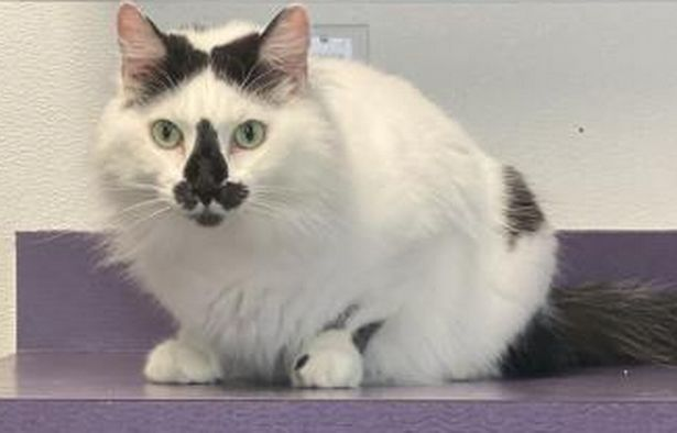 AITA for adopting a cat that has a penis on his face and naming him Richard?