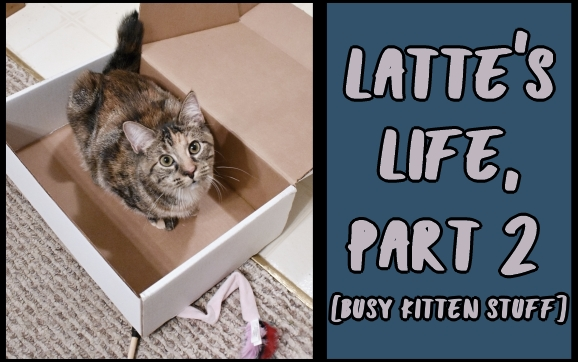 Latte's life, part 2 [busy kitten stuff]
