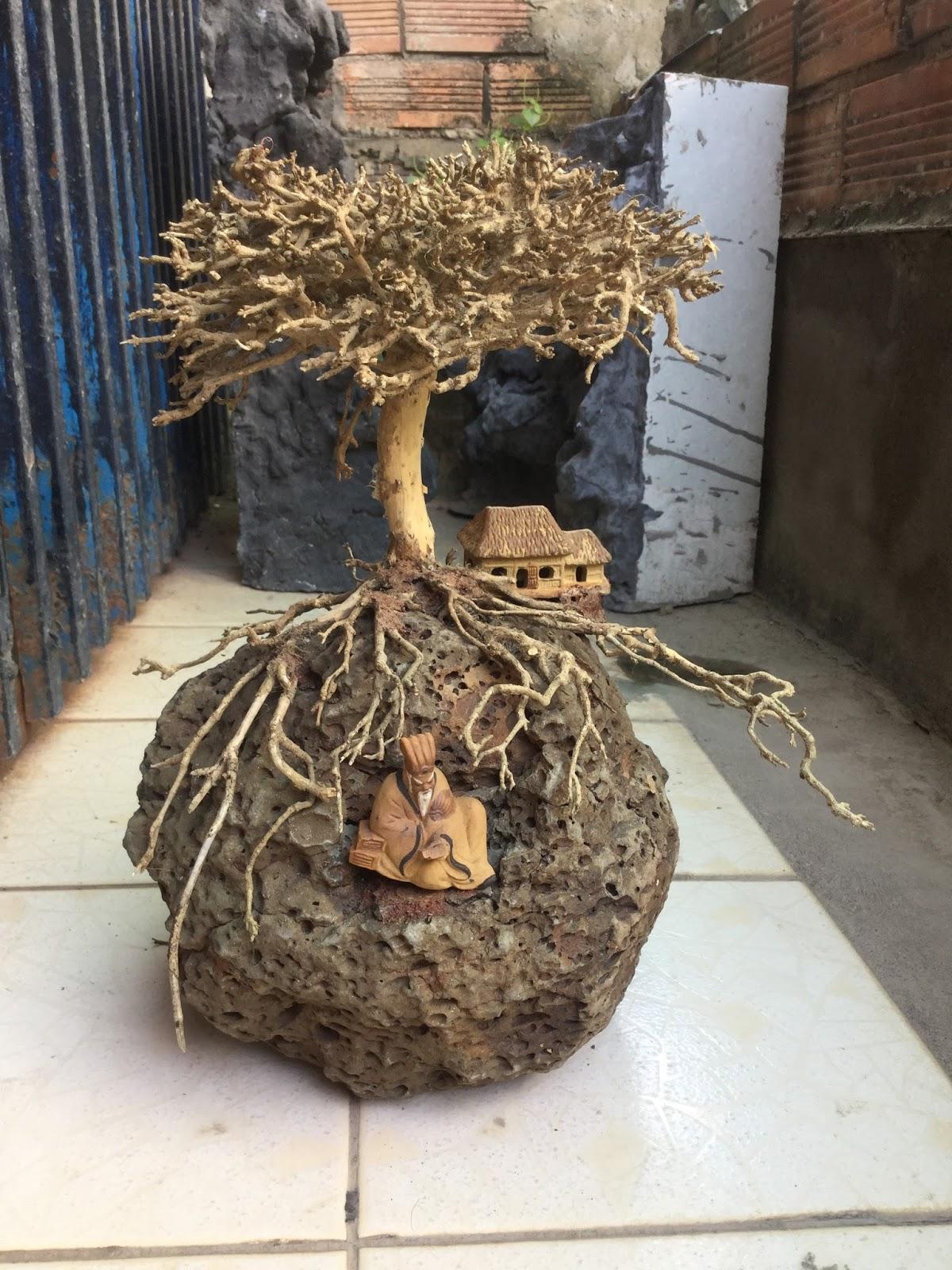 Lũa xương được dùng làm tán cây và cả rễ cây trong cây bon sai dùng trong hồ thủy sinh này