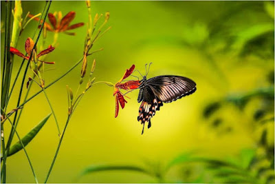 butterfly-sitting-on-beautiful-flowers-like-you