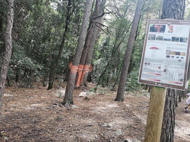 rovello bosc pintat poblet
