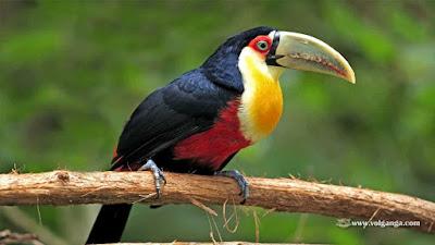 اجمل الصور عصافير, انواع الطيور بالصور, خلفيات طيور الحب, طيور جميلة بألوان غريبة, أنواع الطيور وأسمائها ,بالصور اجمل الطيور