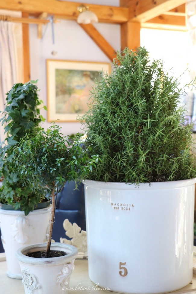 Winter living room greenery to brighten homes after Christmas