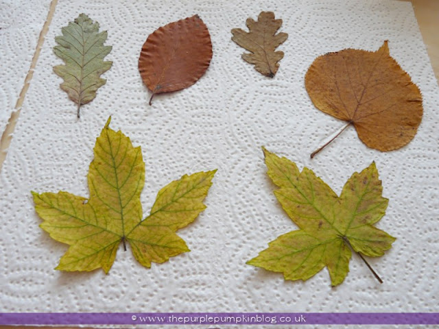Autumn Leaf Coasters | The Purple Pumpkin Blog