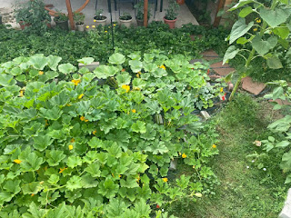 Aerial View of Squashes
