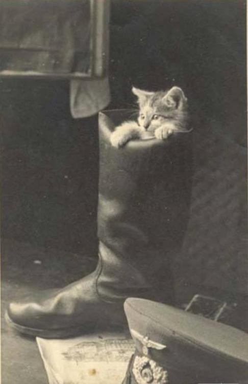 cats worldwartwo.filminspector.com
