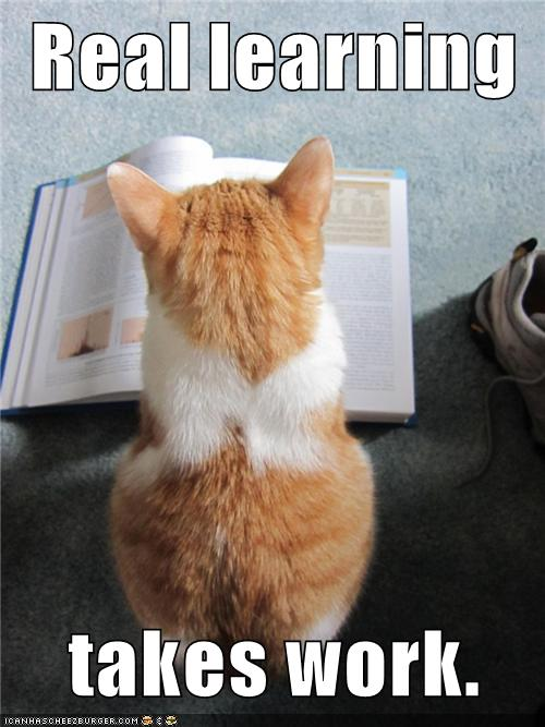 Cat Learning English Meme