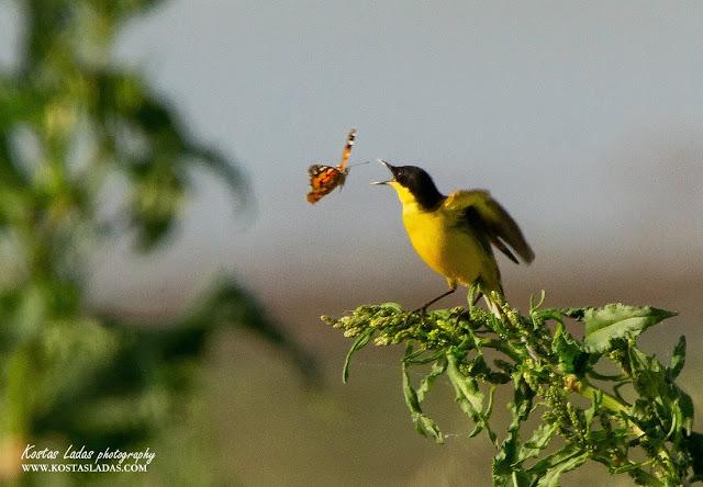 Φωτογραφιες τοπίων -αγριας φύσης Κώστας Λαδάς_Kostas Ladas wildlife photography