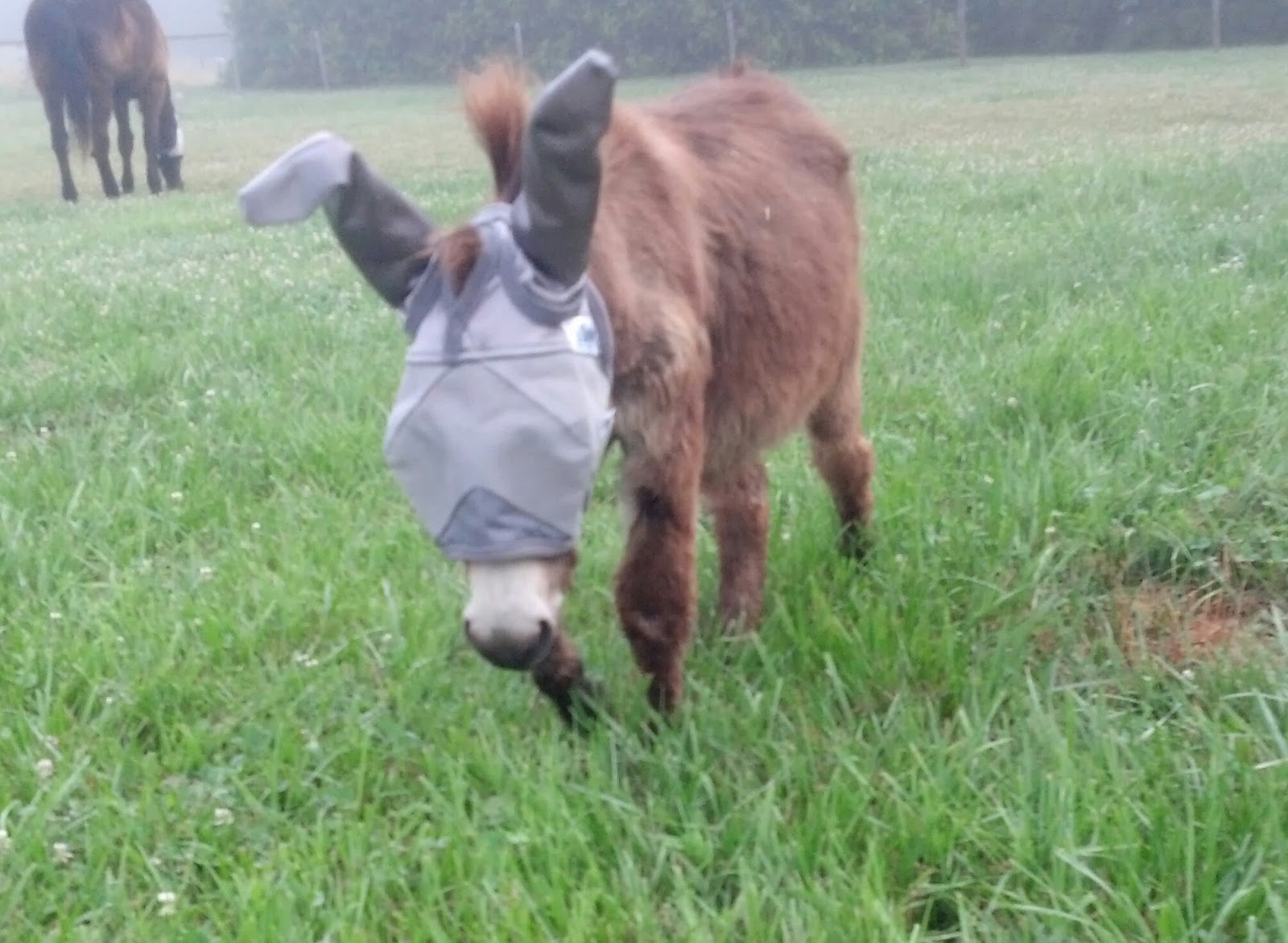 a very small mini-donkey in a fly mask