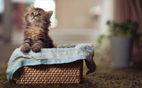 New Baby Cats Animal Hd Wallpaper21