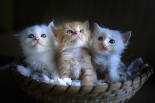 Image: Three Cute Kittens, by Quang Nguyen vinh on Pixabay