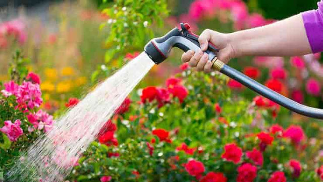 Cara Menyiram Tanaman Yang Baik dan Benar