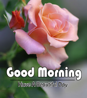 New Good Morning 4k Full HD Images Download For Daily%2B48