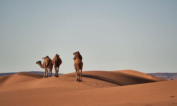 بماذا يتميز المغرب