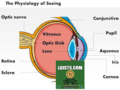 The Anatomy And Physiology Of The Eye