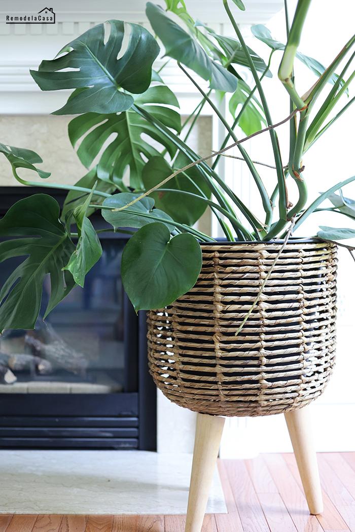 family room summer decor, plant inside rattan planter with legs