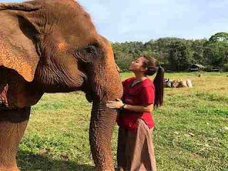सपने में हाथी देखना sapne mein haathi dekhna
