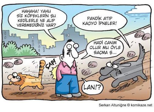 Pandik atıp kaçan kediler ;)
