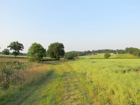 Image for walk 6, The Wildhill Loop, created by The Hertfordshire Walker and released under Creative Commons