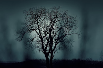 gloomy mysterious tree silhouette