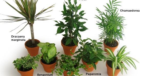 plante interieur obscurite