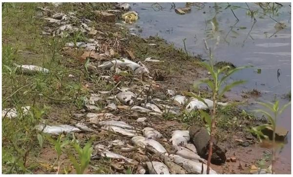 Rio Tietê está ficando irreconhecível em parte do interior paulista UNESP 2020