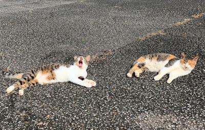 駐車場で昼寝する猫ちゃん