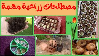 مصطلحات زراعية مهمة للمبتدئين في عالم الزراعة المنزلية