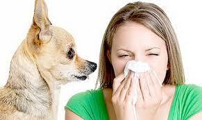 Combate alergia perro gato