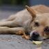 Вісім тварин за добу: в Києві масово труять собак - сайт Голосіївського району