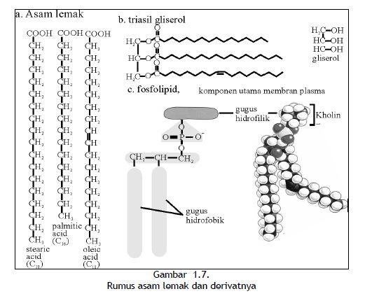 Rumus asam lemak dan derivatnya