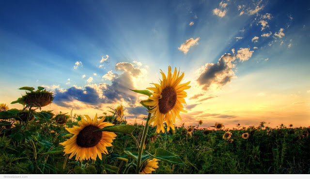 desktop hd nature wallpapers 1080p download by background images hd