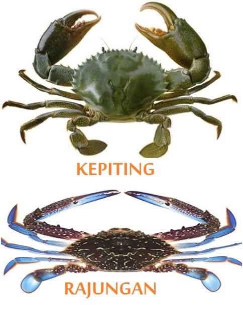 Perbedaan Kepiting dan Rajungan Membawa Perbedaan Hukum Fiqih
