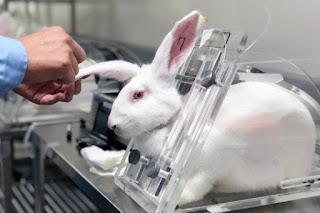 Animales en laboratorios