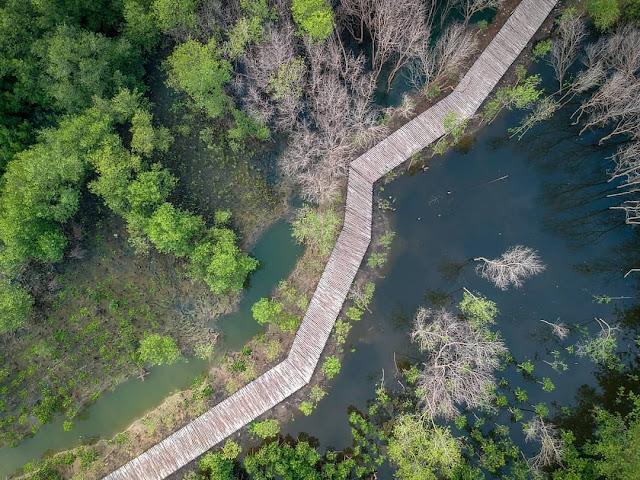 Tiket Masuk dan Lokasi Wisata Mangrove Gunung Anyar Surabaya