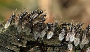 pferde tiere gesundheit soziales zeitgeist hunderte fliegende ameisen auf meinem wei en pferd. Black Bedroom Furniture Sets. Home Design Ideas