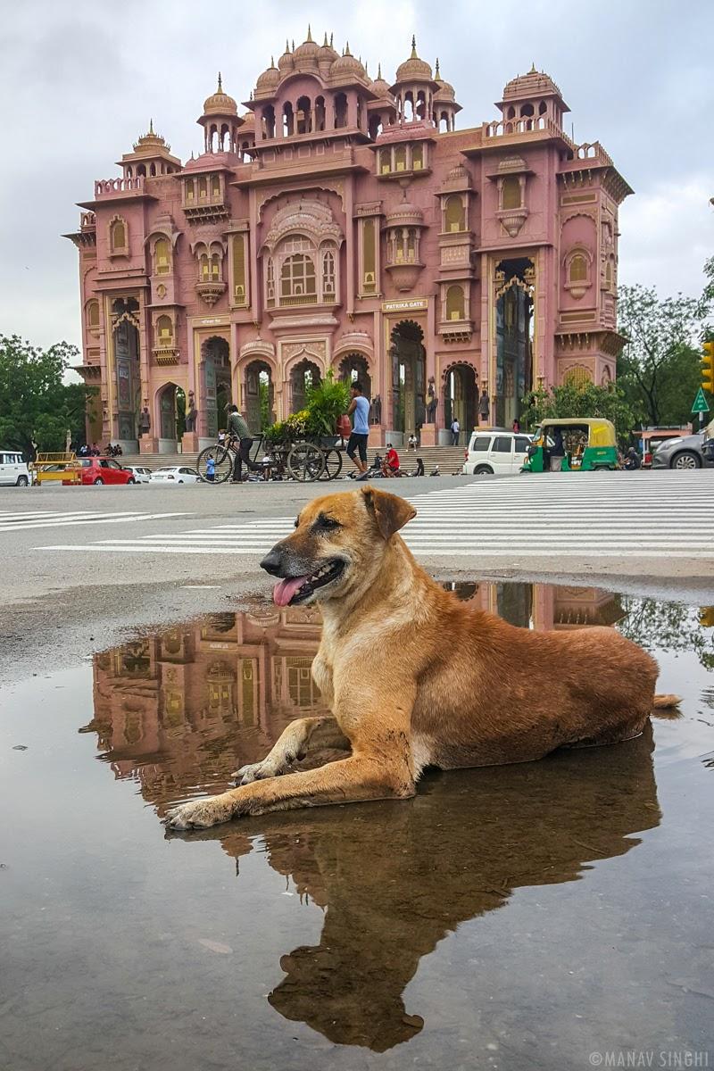 Dog and Patrika Gate - Shot taken in Front of Patrika Gate, Jawahar Circle, Jaipur, Rajasthan.