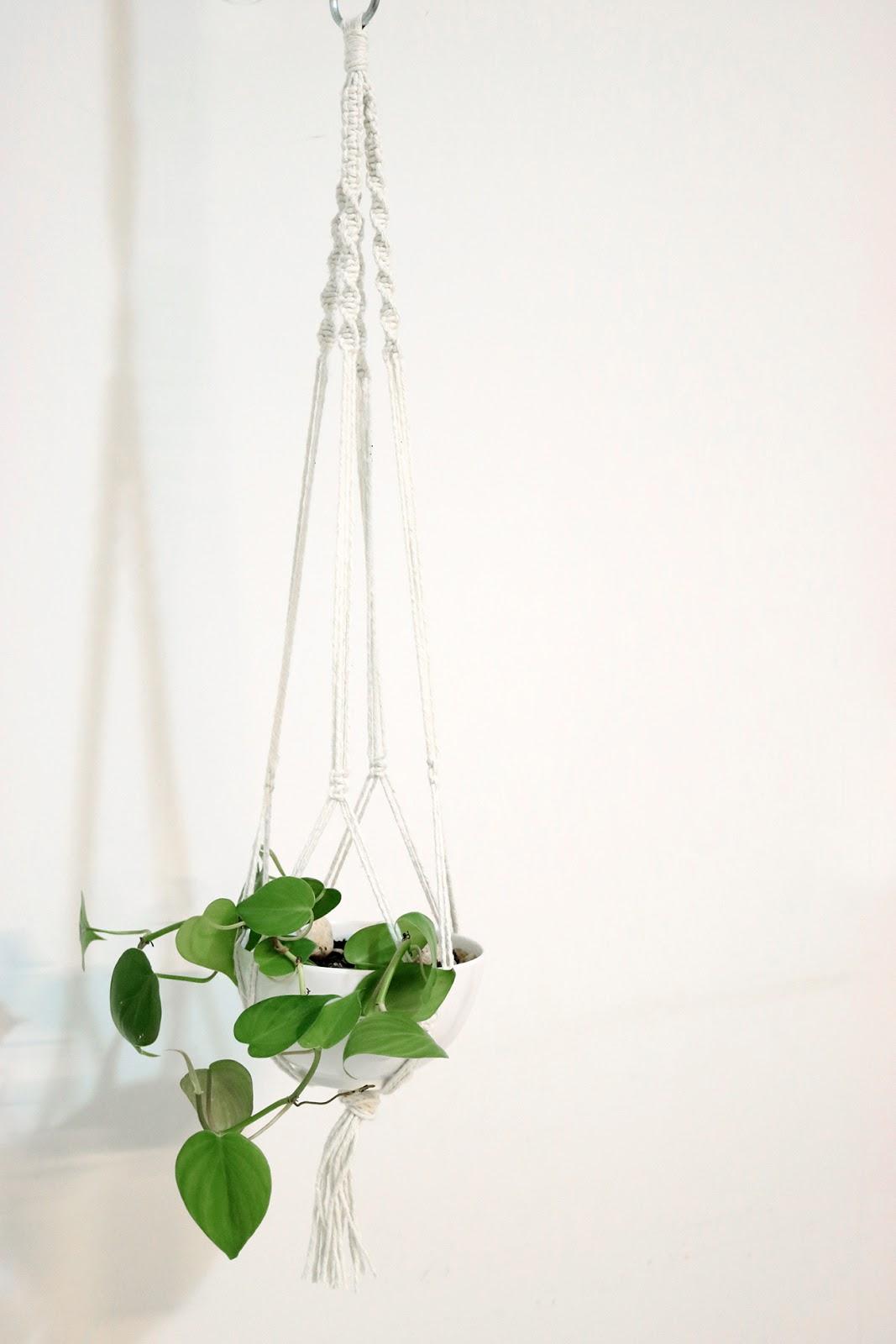 planta macrame