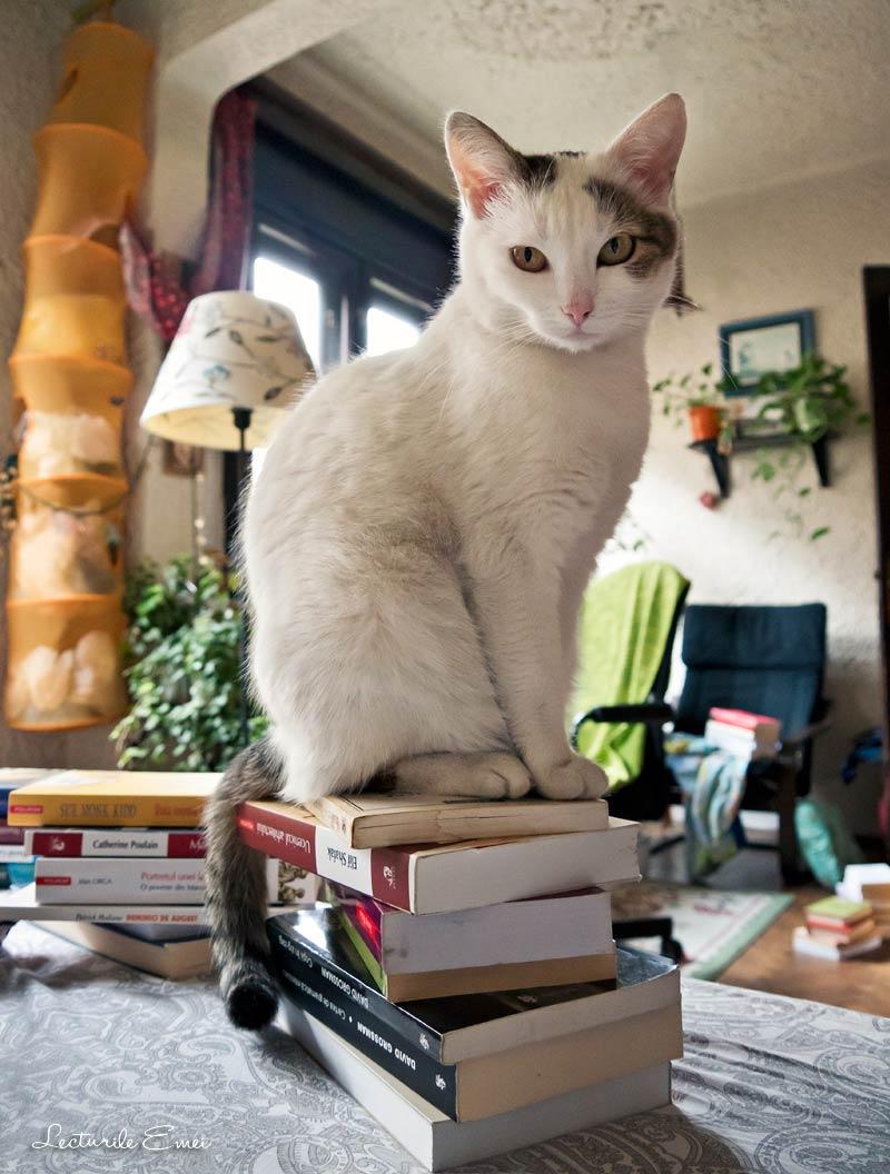pisica pe cărți