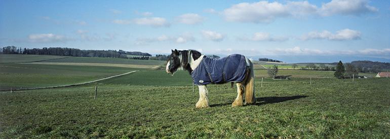 Un cheval dans un pré en Suisse.